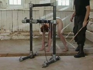 4 girls Hogtied, Cow Milking